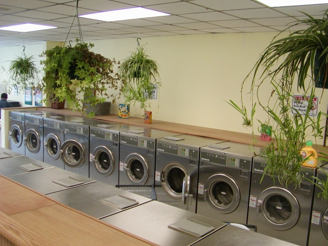 Large Washers and colorful plants Thumbnail